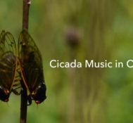 Cicada Music in Ohio