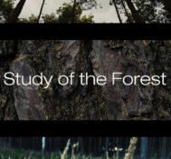 Study of the Forest